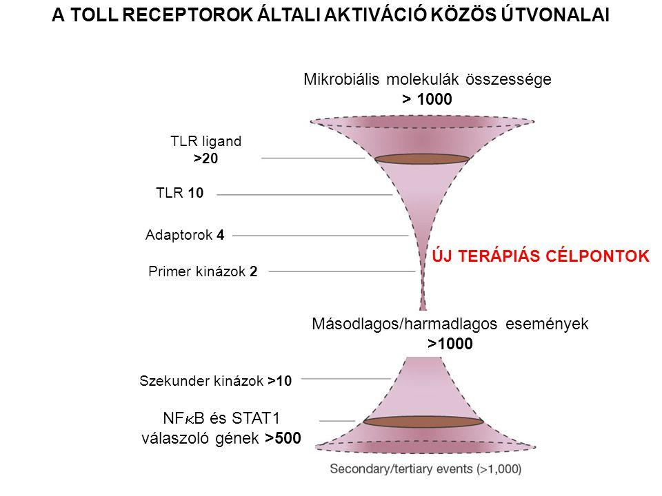 A TOLL RECEPTOROK ÁLTALI AKTIVÁCIÓ KÖZÖS ÚTVONALAI Mikrobiális molekulák összessége > 1000 TLR ligand >20 TLR 10 Adaptorok 4 Primer kinázok 2 Szekunder kinázok >10 NF  B és STAT1 válaszoló gének >500 Másodlagos/harmadlagos események >1000 ÚJ TERÁPIÁS CÉLPONTOK