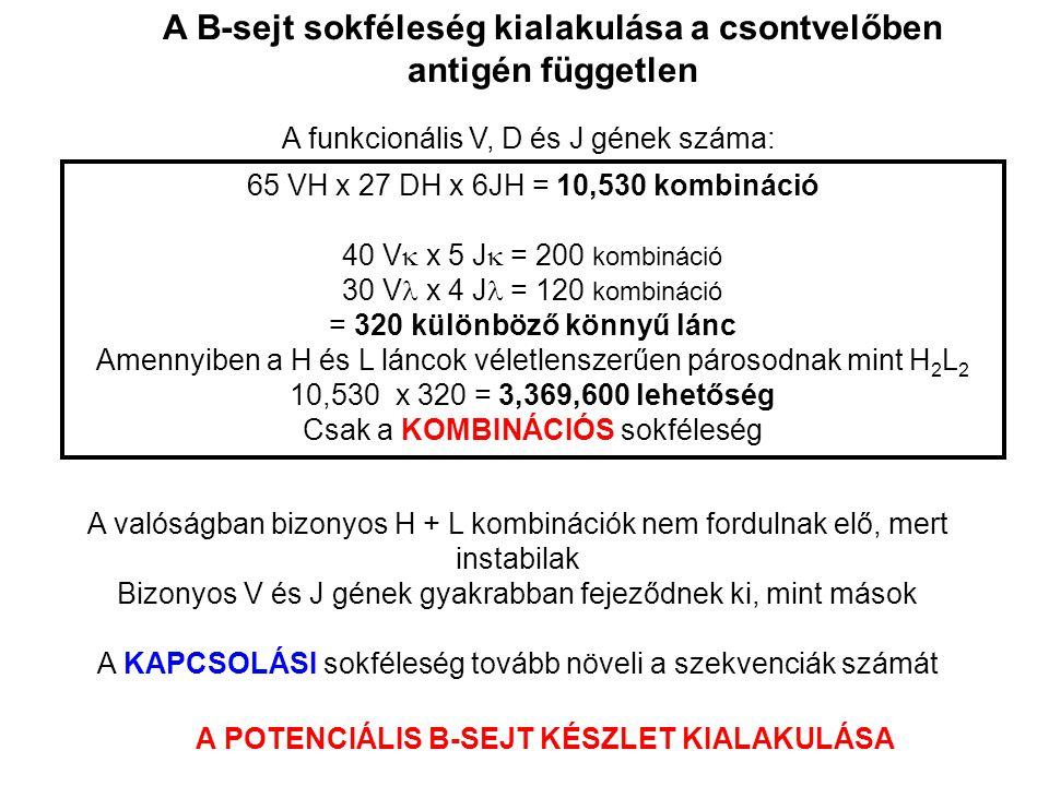 OSZTÁLY/ALOSZTÁLY ANTIGÉNKÖTŐ HELY A H-lánc (nehézlánc) konstans régiójának típusai, eltérő aminosav szekvencia Ig osztályok: IgG, IgA, IgE, IgD, IgM; alosztályok: IgA1-2, IgG1-4 (könnyűlánc izotípusok: κ, λ) A H- és L-lánc variábilis (V) régióinak egyedi szekvencia variabilitása (klón-specifikus) (Ez felel a sokféle antigén specifikus megkötéséért!) A konstans szekvenciákban található allélikus változatok IgG – Gm allélek Egyeden belüli típusok Egyeden belüli különféle antigéneket felismerő változatok Egyedek közötti változatok