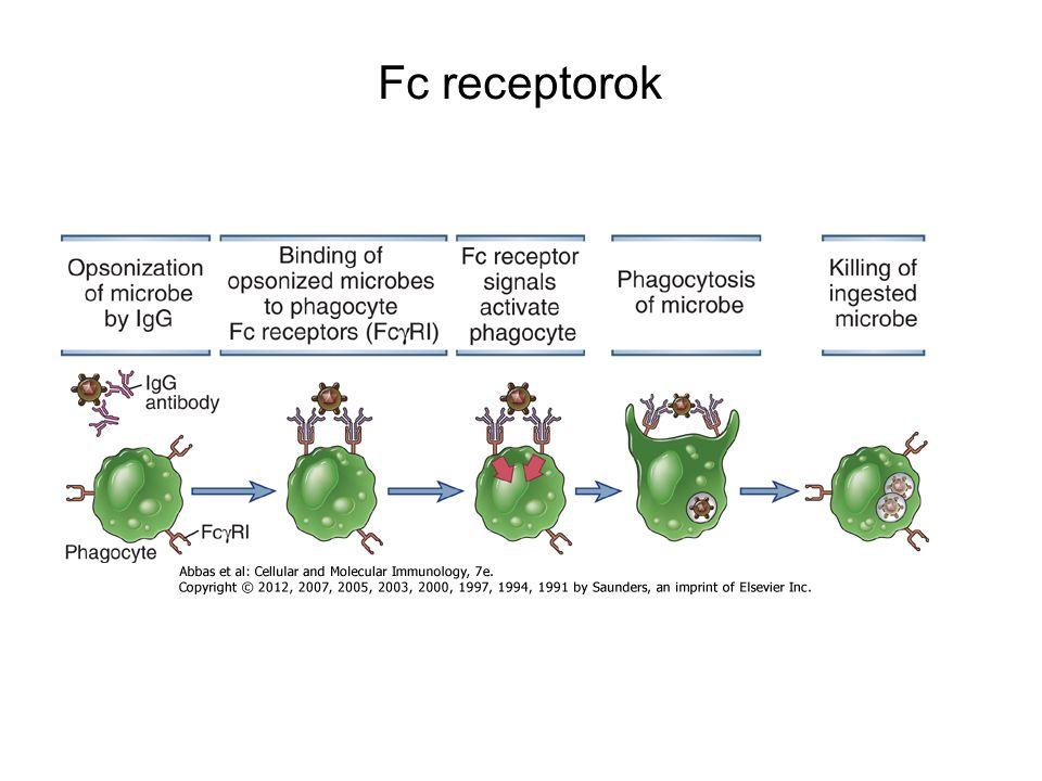 Fc receptorok