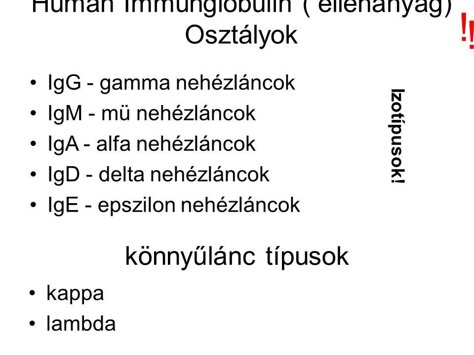 Humán Immunglobulin ( ellenanyag) Osztályok IgG - gamma nehézláncok IgM - mü nehézláncok IgA - alfa nehézláncok IgD - delta nehézláncok IgE - epszilon nehézláncok könnyűlánc típusok kappa lambda Izotípusok.
