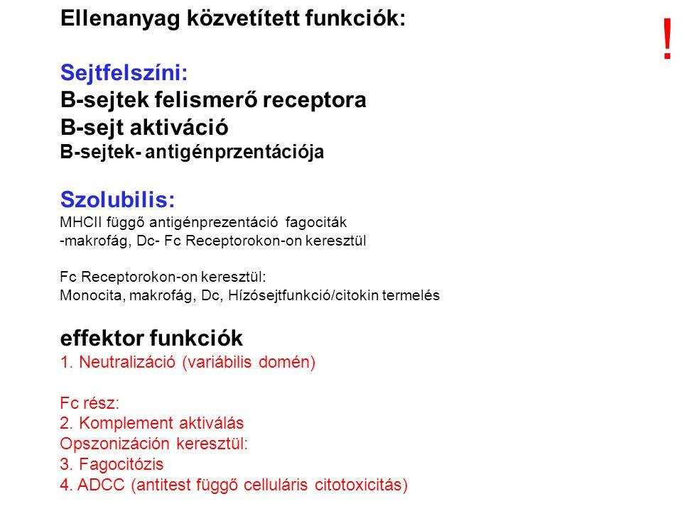 Ellenanyag közvetített funkciók: Sejtfelszíni: B-sejtek felismerő receptora B-sejt aktiváció B-sejtek- antigénprzentációja Szolubilis: MHCII függő antigénprezentáció fagociták -makrofág, Dc- Fc Receptorokon-on keresztül Fc Receptorokon-on keresztül: Monocita, makrofág, Dc, Hízósejtfunkció/citokin termelés effektor funkciók 1.