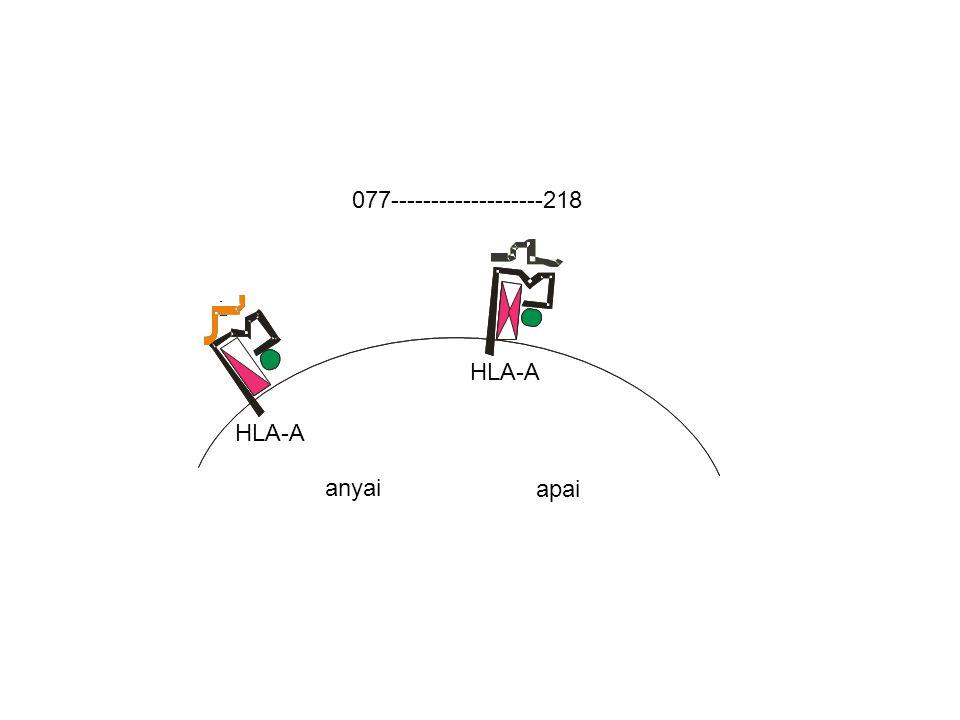 HLA-A 077-------------------218 anyai HLA-A apai