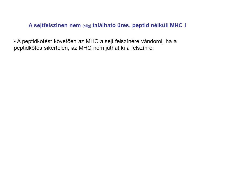 A sejtfelszínen nem (alig) található üres, peptid nélküli MHC I A peptidkötést követően az MHC a sejt felszínére vándorol, ha a peptidkötés sikertelen, az MHC nem juthat ki a felszínre.