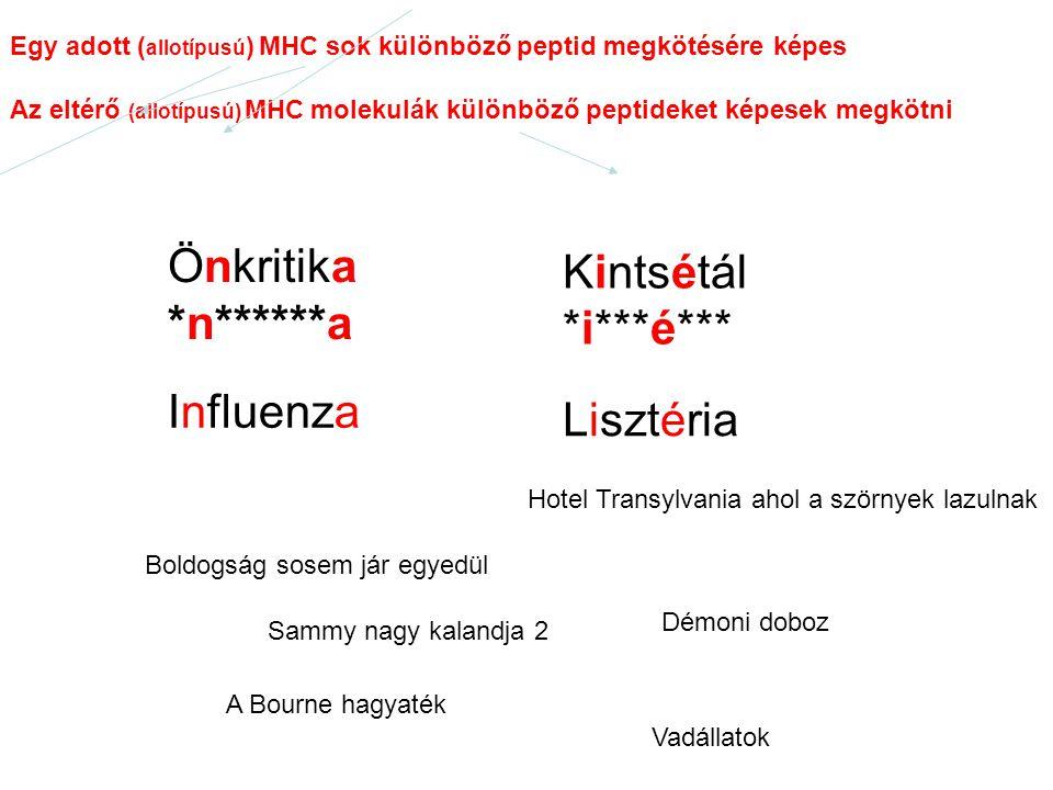 Önkritika *n******a Kintsétál *i***é*** Egy adott ( allotípusú ) MHC sok különböző peptid megkötésére képes Az eltérő (allotípusú) MHC molekulák külön