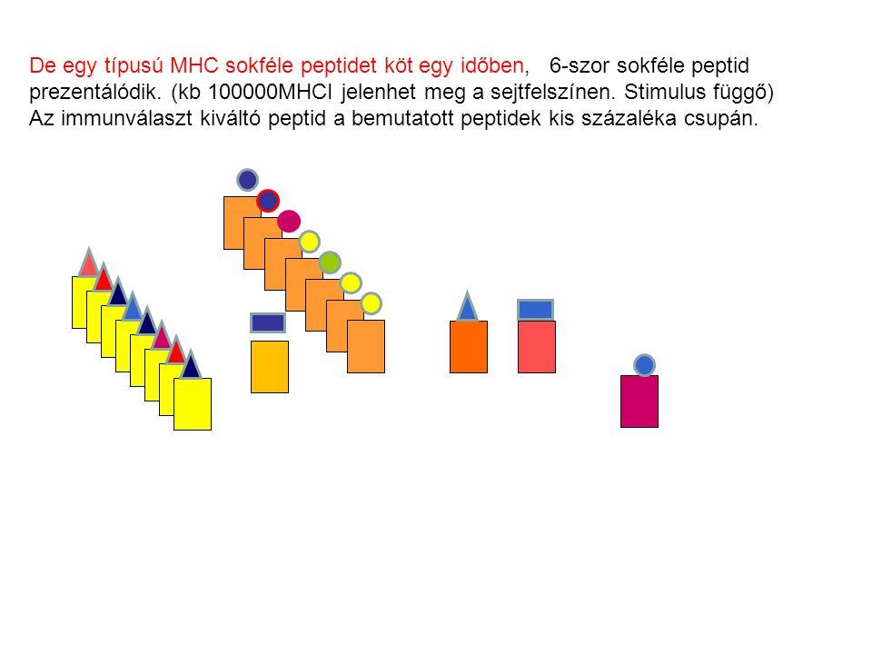 De egy típusú MHC sokféle peptidet köt egy időben, 6-szor sokféle peptid prezentálódik. (kb 100000MHCI jelenhet meg a sejtfelszínen. Stimulus függő) A