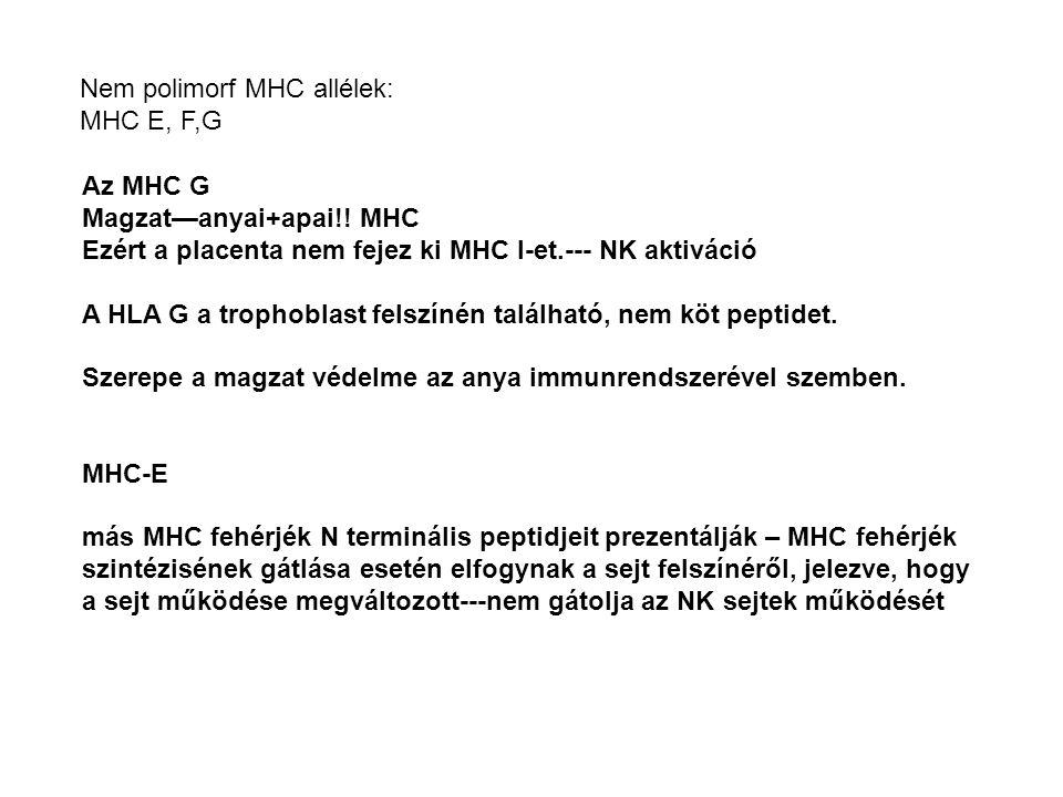 Az MHC G Magzat—anyai+apai!! MHC Ezért a placenta nem fejez ki MHC I-et.--- NK aktiváció A HLA G a trophoblast felszínén található, nem köt peptidet.