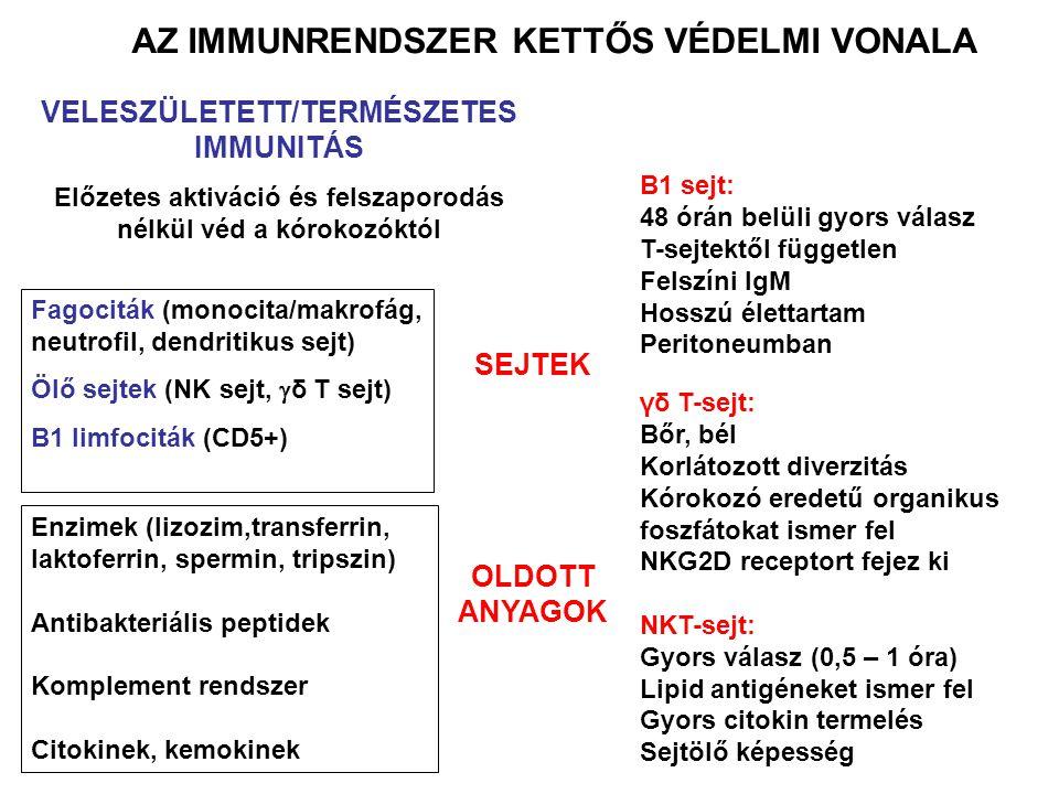 AZ IMMUNRENDSZER KETTŐS VÉDELMI VONALA VELESZÜLETETT/TERMÉSZETES IMMUNITÁS Előzetes aktiváció és felszaporodás nélkül véd a kórokozóktól SEJTEK OLDOTT ANYAGOK Fagociták (monocita/makrofág, neutrofil, dendritikus sejt) Ölő sejtek (NK sejt,  δ T sejt) B1 limfociták (CD5+) Enzimek (lizozim,transferrin, laktoferrin, spermin, tripszin) Antibakteriális peptidek Komplement rendszer Citokinek, kemokinek B1 sejt: 48 órán belüli gyors válasz T-sejtektől független Felszíni IgM Hosszú élettartam Peritoneumban γδ T-sejt: Bőr, bél Korlátozott diverzitás Kórokozó eredetű organikus foszfátokat ismer fel NKG2D receptort fejez ki NKT-sejt: Gyors válasz (0,5 – 1 óra) Lipid antigéneket ismer fel Gyors citokin termelés Sejtölő képesség