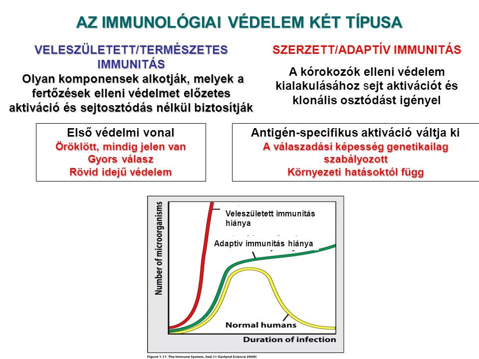 AZ IMMUNOLÓGIAI VÉDELEM KÉT TÍPUSA VELESZÜLETETT/TERMÉSZETES IMMUNITÁS Olyan komponensek alkotják, melyek a fertőzések elleni védelmet előzetes aktiváció és sejtosztódás nélkül biztosítják Olyan komponensek alkotják, melyek a fertőzések elleni védelmet előzetes aktiváció és sejtosztódás nélkül biztosítják SZERZETT/ADAPTÍV IMMUNITÁS A kórokozók elleni védelem kialakulásához sejt aktivációt és klonális osztódást igényel Első védelmi vonal Öröklött, mindig jelen van Gyors válasz Rövid idejű védelem Antigén-specifikus aktiváció váltja ki A válaszadási képesség genetikailag szabályozott Környezeti hatásoktól függ Adaptív immunitás hiánya Veleszületett immunitás hiánya