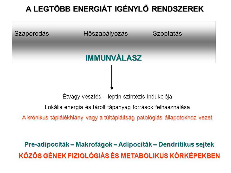 IMMUNVÁLASZ SzaporodásHőszabályozásSzoptatás A LEGTÖBB ENERGIÁT IGÉNYLŐ RENDSZEREK Étvágy vesztés – leptin szintézis indukciója Lokális energia és tárolt tápanyag források felhasználása A krónikus táplálékhiány vagy a túltápláltság patológiás állapotokhoz vezet Pre-adipociták – Makrofágok – Adipociták – Dendritikus sejtek KÖZÖS GÉNEK FIZIOLÓGIÁS ÉS METABOLIKUS KÓRKÉPEKBEN