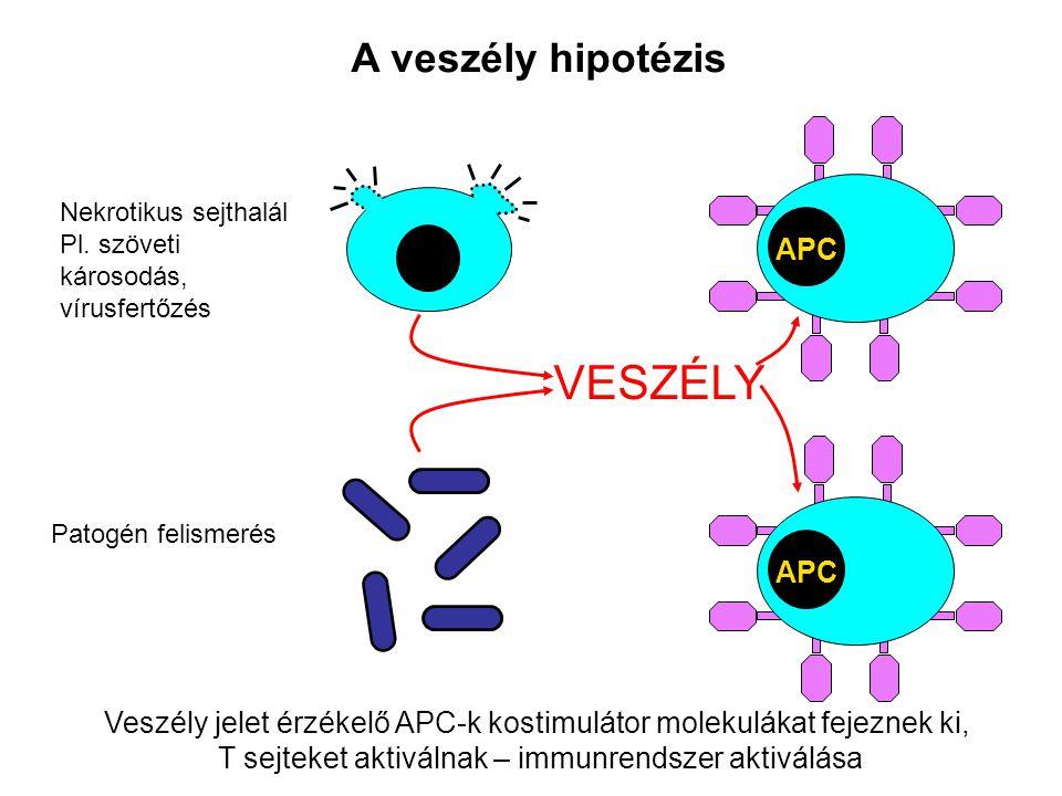 A veszély hipotézis APC Nekrotikus sejthalál Pl. szöveti károsodás, vírusfertőzés Patogén felismerés VESZÉLY Veszély jelet érzékelő APC-k kostimulátor