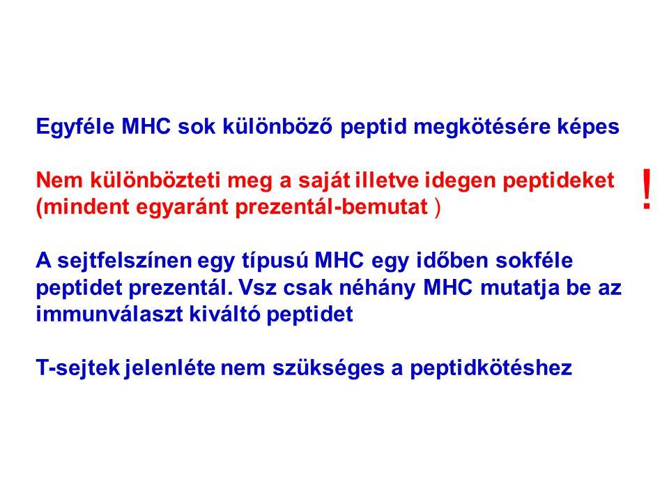 Egyféle MHC sok különböző peptid megkötésére képes Nem különbözteti meg a saját illetve idegen peptideket (mindent egyaránt prezentál-bemutat ) A sejtfelszínen egy típusú MHC egy időben sokféle peptidet prezentál.