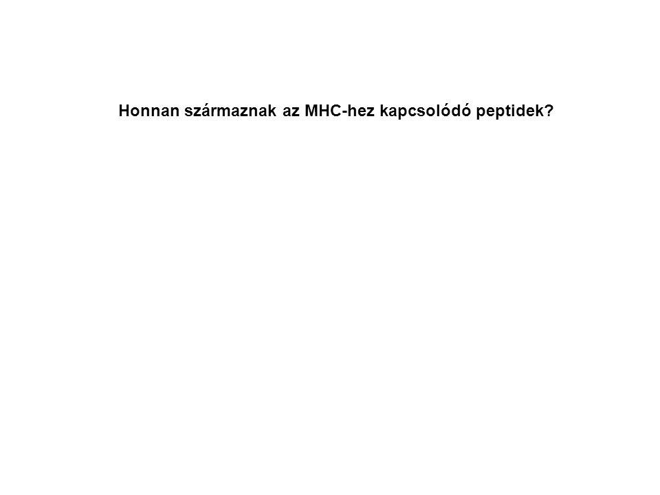 Honnan származnak az MHC-hez kapcsolódó peptidek?
