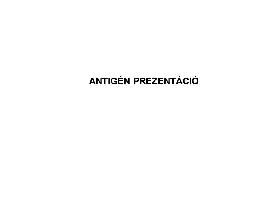 ANTIGÉN PREZENTÁCIÓ