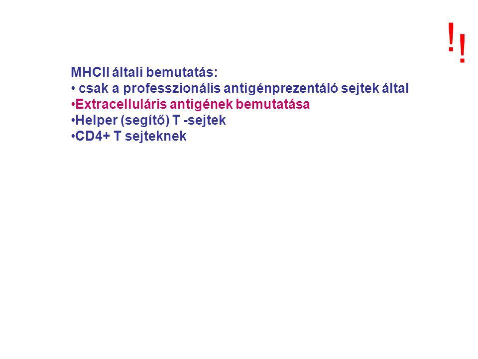 MHCII általi bemutatás: csak a professzionális antigénprezentáló sejtek által Extracelluláris antigének bemutatása Helper (segítő) T -sejtek CD4+ T se