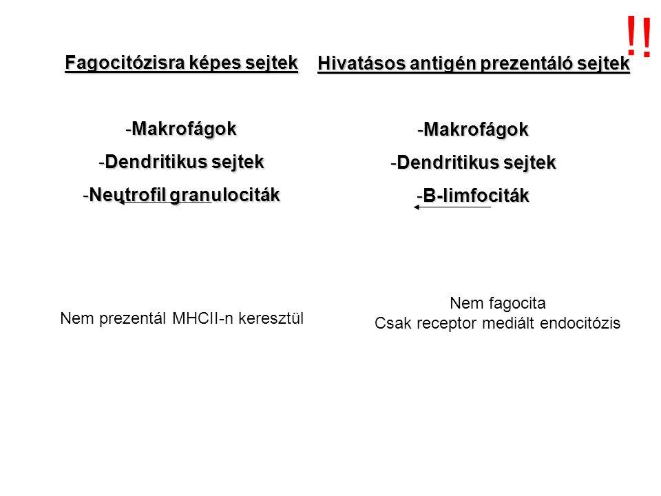 Fagocitózisra képes sejtek -Makrofágok -Dendritikus sejtek -Neutrofil granulociták Hivatásos antigén prezentáló sejtek -Makrofágok -Dendritikus sejtek -B-limfociták .