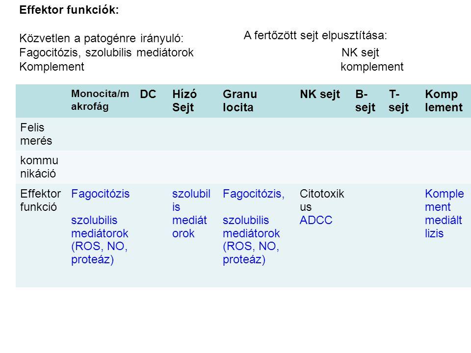Monocita/m akrofág DCHízó Sejt Granu locita NK sejtB- sejt T- sejt Komp lement Felis merés kommu nikáció Effektor funkció Fagocitózis szolubilis mediátorok (ROS, NO, proteáz) szolubil is mediát orok Fagocitózis, szolubilis mediátorok (ROS, NO, proteáz) Citotoxik us ADCC Komple ment mediált lizis Effektor funkciók: Közvetlen a patogénre irányuló: Fagocitózis, szolubilis mediátorok NK sejt Komplement komplement A fertőzött sejt elpusztítása: