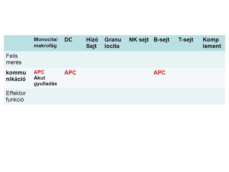 Monocita/ makrofág DCHízó Sejt Granu locita NK sejtB-sejtT-sejtKomp lement Felis merés kommu nikáció APC Akut gyulladás APC Effektor funkció
