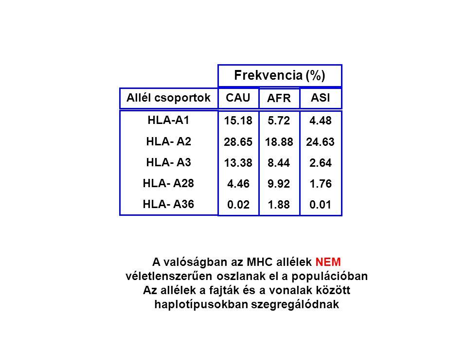 A valóságban az MHC allélek NEM véletlenszerűen oszlanak el a populációban Az allélek a fajták és a vonalak között haplotípusokban szegregálódnak 15.1