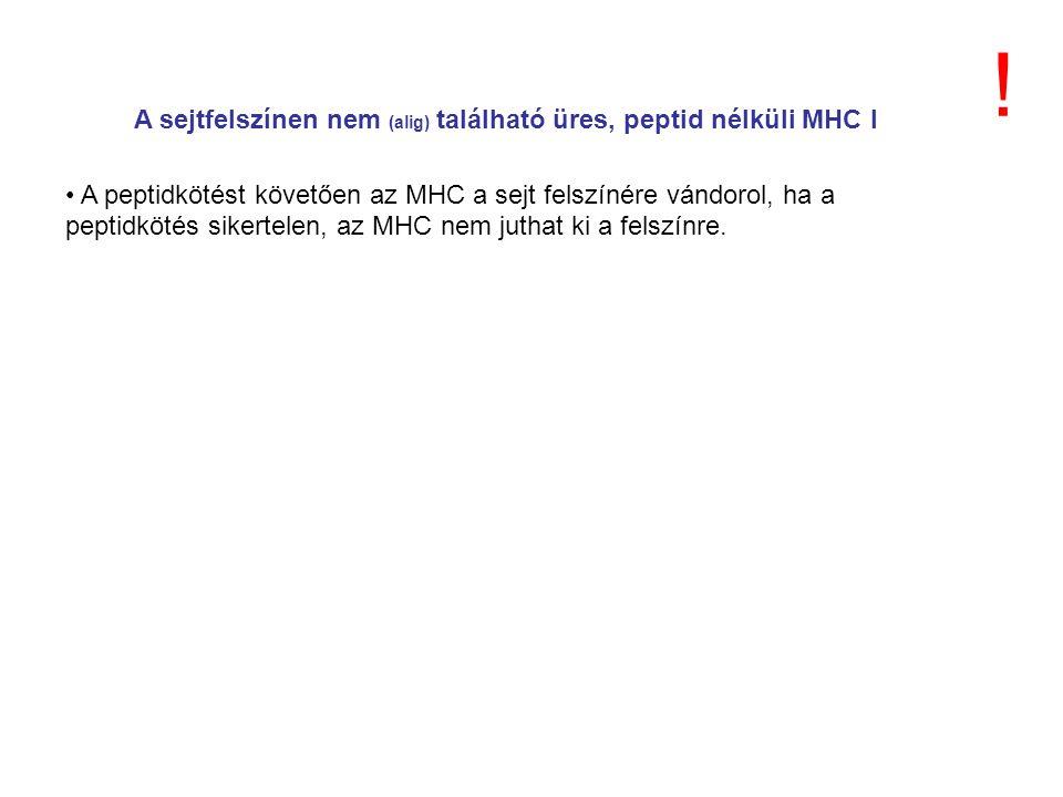 A sejtfelszínen nem (alig) található üres, peptid nélküli MHC I A peptidkötést követően az MHC a sejt felszínére vándorol, ha a peptidkötés sikertelen