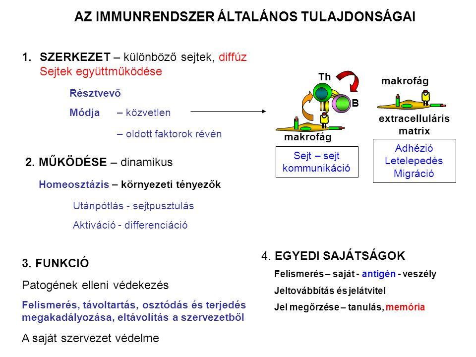 Tímusz Lép Csontvelő Nyirokcsomó Madulák Féregnyúlvány Elsődleges (központi) és másodlagos (perifériás) nyirokszervek: Az elsődleges nyirokszervek az immunrendszer sejtei képződésének/érésének helyei, a másodlagos nyirokszervek az immunválasz központi területei !!