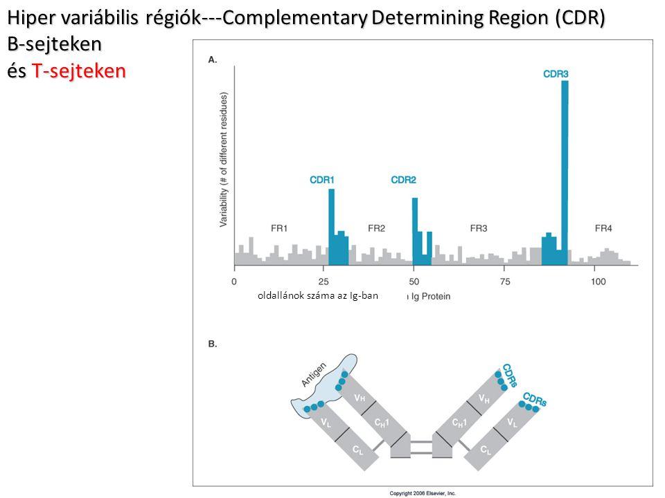 Hiper variábilis régiók---Complementary Determining Region (CDR) B-sejteken és T-sejteken oldallánok száma az Ig-ban