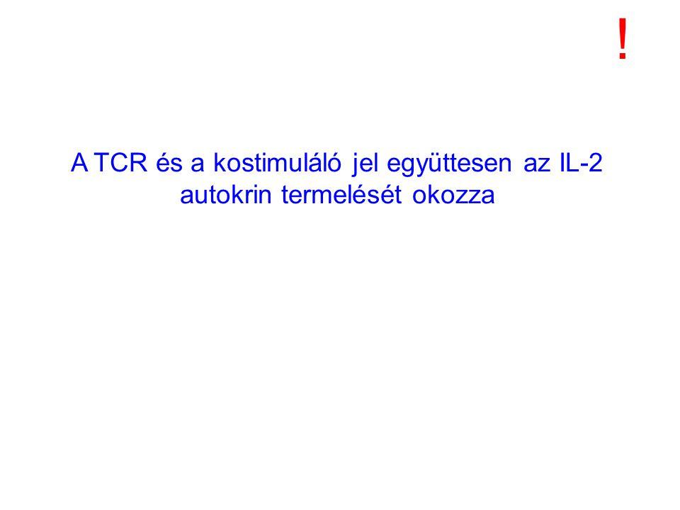 A TCR és a kostimuláló jel együttesen az IL-2 autokrin termelését okozza !