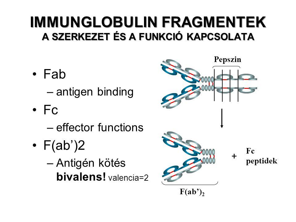 Pepszin Fc peptidek F(ab') 2 Fab –antigen binding Fc –effector functions F(ab')2 –Antigén kötés bivalens! valencia=2 + IMMUNGLOBULIN FRAGMENTEK A SZER