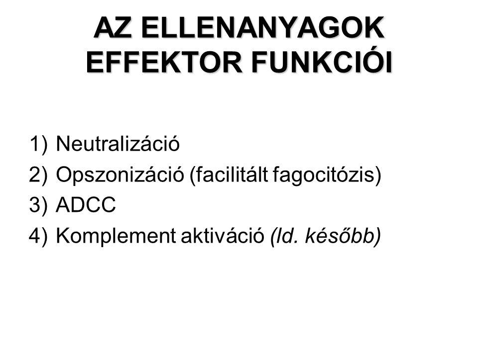 AZ ELLENANYAGOK EFFEKTOR FUNKCIÓI 1)Neutralizáció 2)Opszonizáció (facilitált fagocitózis) 3)ADCC 4)Komplement aktiváció (ld. később)