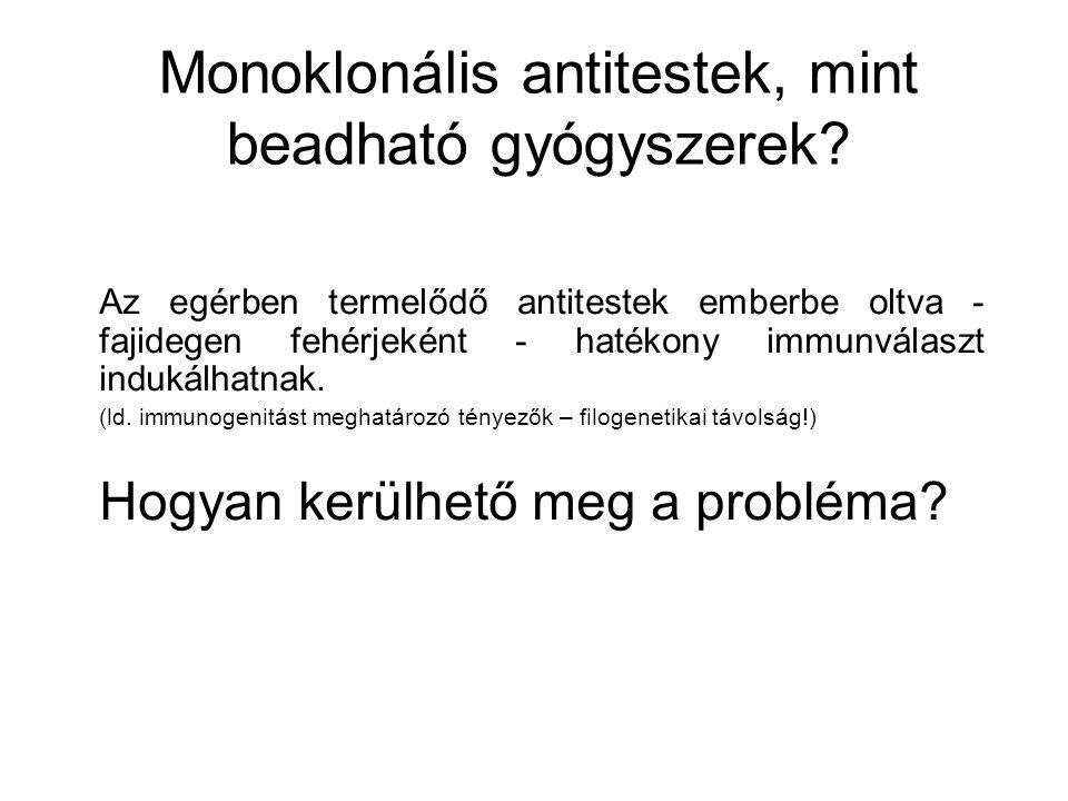 Monoklonális antitestek, mint beadható gyógyszerek? Az egérben termelődő antitestek emberbe oltva - fajidegen fehérjeként - hatékony immunválaszt indu