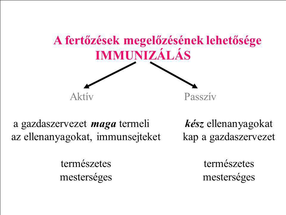 A fertőzések megelőzésének lehetősége IMMUNIZÁLÁS AktívPasszív a gazdaszervezet maga termelikész ellenanyagokat az ellenanyagokat, immunsejteketkap a