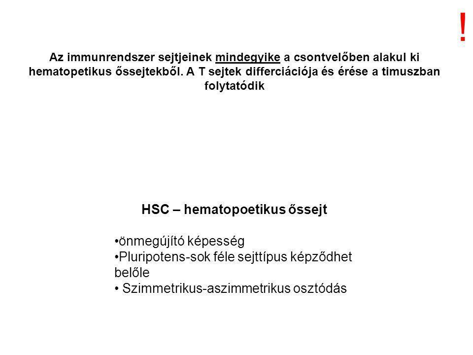 önmegújító képesség Pluripotens-sok féle sejttípus képződhet belőle Szimmetrikus-aszimmetrikus osztódás Az immunrendszer sejtjeinek mindegyike a csontvelőben alakul ki hematopetikus őssejtekből.