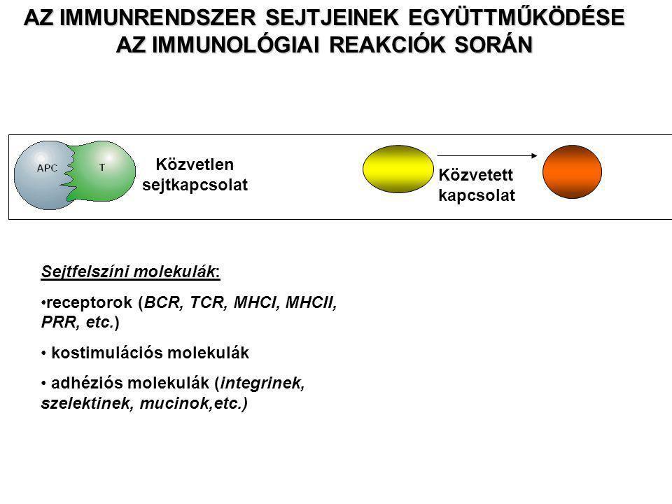 AZ IMMUNRENDSZER SEJTJEINEK EGYÜTTMŰKÖDÉSE AZ IMMUNOLÓGIAI REAKCIÓK SORÁN Közvetlen sejtkapcsolat Közvetett kapcsolat Sejtfelszíni molekulák: receptorok (BCR, TCR, MHCI, MHCII, PRR, etc.) kostimulációs molekulák adhéziós molekulák (integrinek, szelektinek, mucinok,etc.)