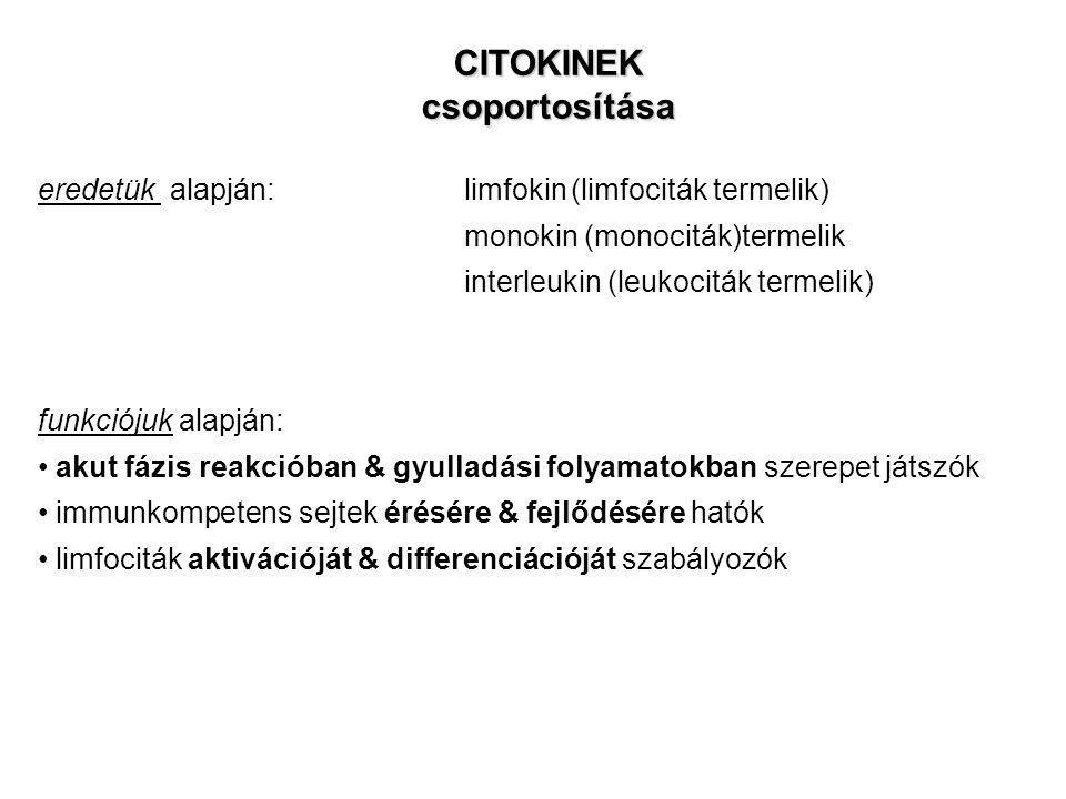 CITOKINEKcsoportosítása eredetük alapján: limfokin(limfociták termelik) monokin (monociták)termelik interleukin (leukociták termelik) funkciójuk alapj