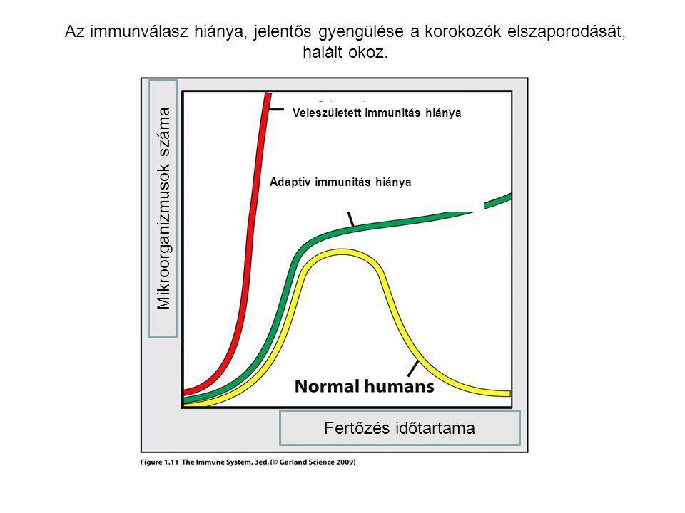 Adaptív immunitás hiánya Veleszületett immunitás hiánya Az immunválasz hiánya, jelentős gyengülése a korokozók elszaporodását, halált okoz. Fertőzés i