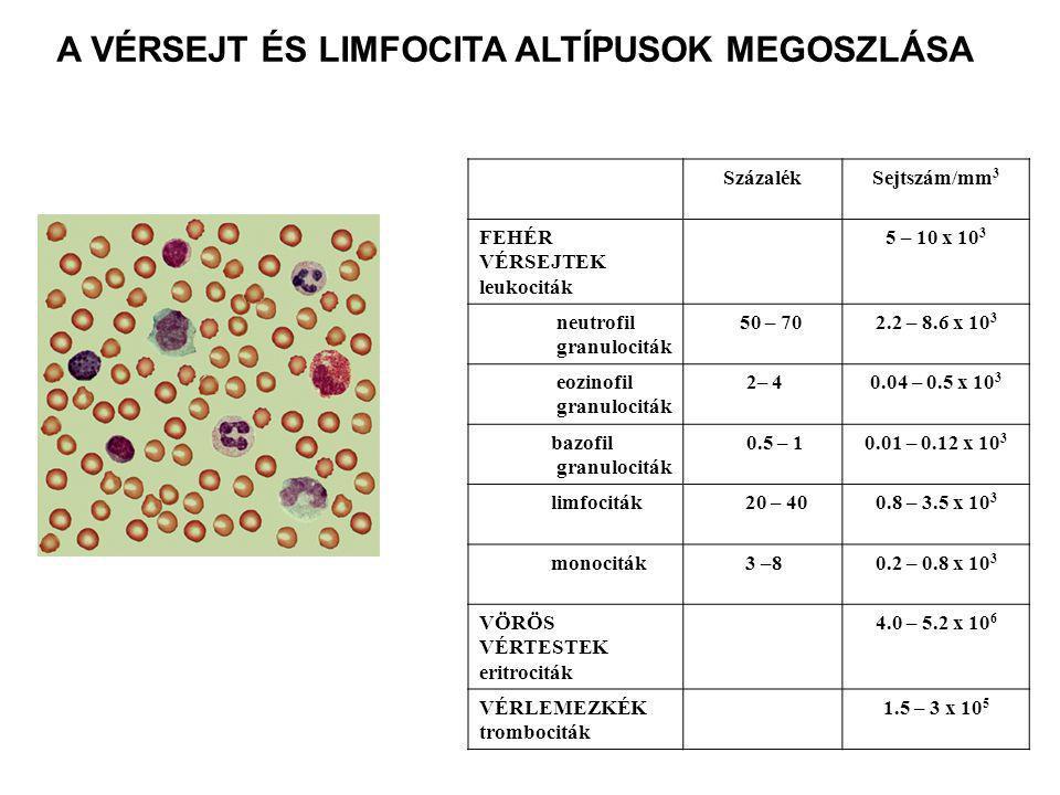 A VÉRSEJT ÉS LIMFOCITA ALTÍPUSOK MEGOSZLÁSA SzázalékSejtszám/mm 3 FEHÉR VÉRSEJTEK leukociták 5 – 10 x 10 3 neutrofil granulociták 50 – 702.2 – 8.6 x 10 3 eozinofil granulociták 2– 40.04 – 0.5 x 10 3 bazofil granulociták 0.5 – 10.01 – 0.12 x 10 3 limfociták 20 – 400.8 – 3.5 x 10 3 monociták 3 –80.2 – 0.8 x 10 3 VÖRÖS VÉRTESTEK eritrociták 4.0 – 5.2 x 10 6 VÉRLEMEZKÉK trombociták 1.5 – 3 x 10 5
