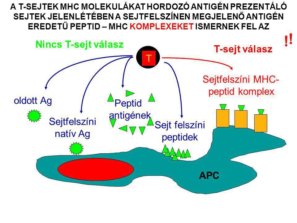 AZ ANTIGÉN BEMUTATÁS/PREZENTÁCIÓ FELTÉTELEI 1.MHC molekulák kifejeződése a sejtfelszínen citotoxikus T sejt válasz 2.Az antigének intracelluláris szintézise – citotoxikus T sejt válasz 3.Fehérje antigének felvétele az extracelluláris térből – helper T sejt válasz 4.A fehérje antigének intracelluláris denaturációja/feldolgozása a T- sejtek számára 5.Az intracellulárisan feldolgozott fehérje antigének fragmentumai (peptidek) sejtfelszíni bemutatása az MHC molekulák által Az  TCR-ral rendelkező T limfociták a fehérje antigénekből származó peptidek és MHC molekulák által képzett sejtfelszíni komplexek felismerésére szakosodtak !