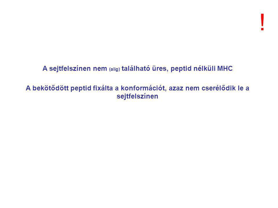 A sejtfelszínen nem (alig) található üres, peptid nélküli MHC A bekötődött peptid fixálta a konformációt, azaz nem cserélődik le a sejtfelszínen !