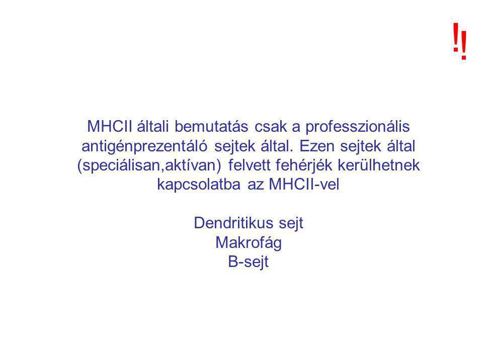 MHCII általi bemutatás csak a professzionális antigénprezentáló sejtek által.