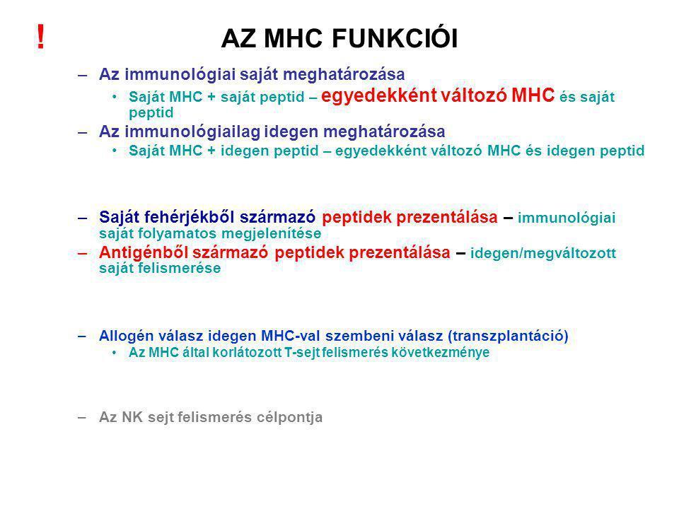AZ MHC FUNKCIÓI –Az immunológiai saját meghatározása Saját MHC + saját peptid – egyedekként változó MHC és saját peptid –Az immunológiailag idegen meghatározása Saját MHC + idegen peptid – egyedekként változó MHC és idegen peptid –Saját fehérjékből származó peptidek prezentálása – immunológiai saját folyamatos megjelenítése –Antigénből származó peptidek prezentálása – idegen/megváltozott saját felismerése –Allogén válasz idegen MHC-val szembeni válasz (transzplantáció) Az MHC által korlátozott T-sejt felismerés következménye –Az NK sejt felismerés célpontja !