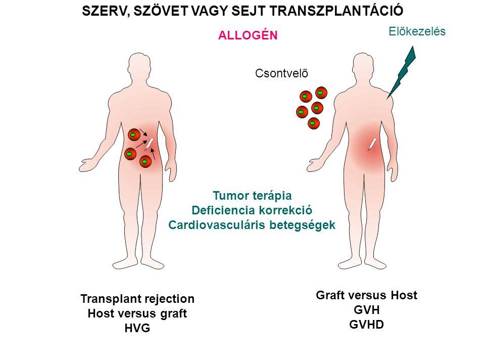 SZERV, SZÖVET VAGY SEJT TRANSZPLANTÁCIÓ ALLOGÉN Csontvelő Transplant rejection Host versus graft HVG Graft versus Host GVH GVHD Előkezelés Tumor terápia Deficiencia korrekció Cardiovasculáris betegségek