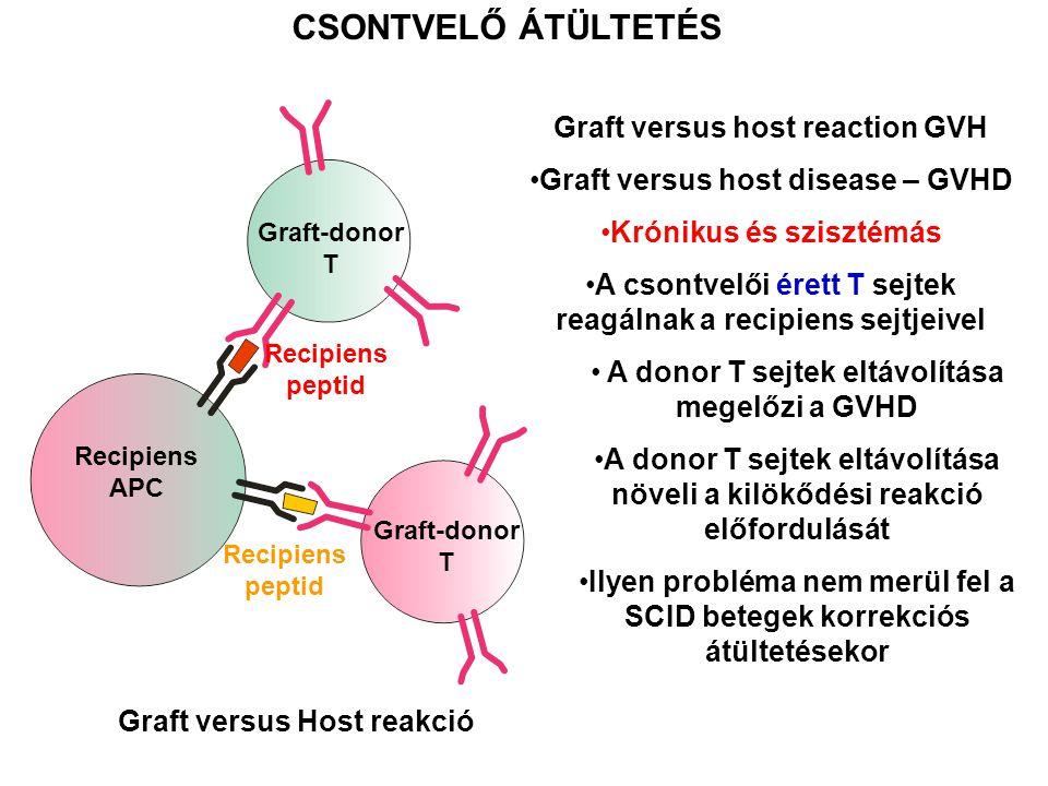 Graft versus host reaction GVH Graft versus host disease – GVHD Krónikus és szisztémás A csontvelői érett T sejtek reagálnak a recipiens sejtjeivel A donor T sejtek eltávolítása megelőzi a GVHD A donor T sejtek eltávolítása növeli a kilökődési reakció előfordulását Ilyen probléma nem merül fel a SCID betegek korrekciós átültetésekor CSONTVELŐ ÁTÜLTETÉS Recipiens APC Graft-donor T Graft-donor T Recipiens peptid Graft versus Host reakció