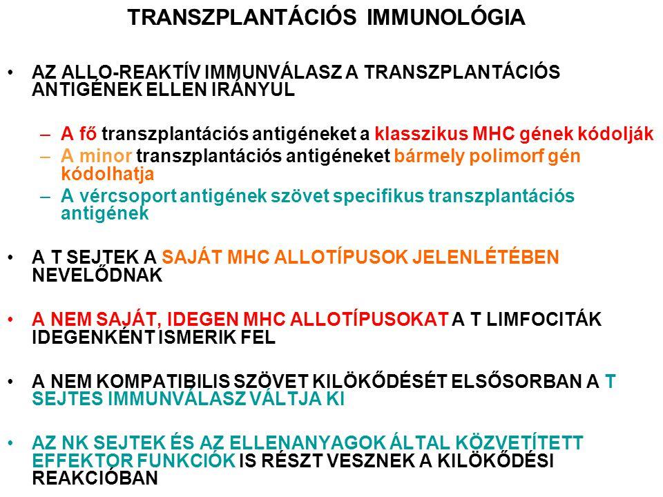 AZ ALLO-REAKTÍV IMMUNVÁLASZ A TRANSZPLANTÁCIÓS ANTIGÉNEK ELLEN IRÁNYUL –A fő transzplantációs antigéneket a klasszikus MHC gének kódolják –A minor transzplantációs antigéneket bármely polimorf gén kódolhatja –A vércsoport antigének szövet specifikus transzplantációs antigének A T SEJTEK A SAJÁT MHC ALLOTÍPUSOK JELENLÉTÉBEN NEVELŐDNAK A NEM SAJÁT, IDEGEN MHC ALLOTÍPUSOKAT A T LIMFOCITÁK IDEGENKÉNT ISMERIK FEL A NEM KOMPATIBILIS SZÖVET KILÖKŐDÉSÉT ELSŐSORBAN A T SEJTES IMMUNVÁLASZ VÁLTJA KI AZ NK SEJTEK ÉS AZ ELLENANYAGOK ÁLTAL KÖZVETÍTETT EFFEKTOR FUNKCIÓK IS RÉSZT VESZNEK A KILÖKŐDÉSI REAKCIÓBAN TRANSZPLANTÁCIÓS IMMUNOLÓGIA