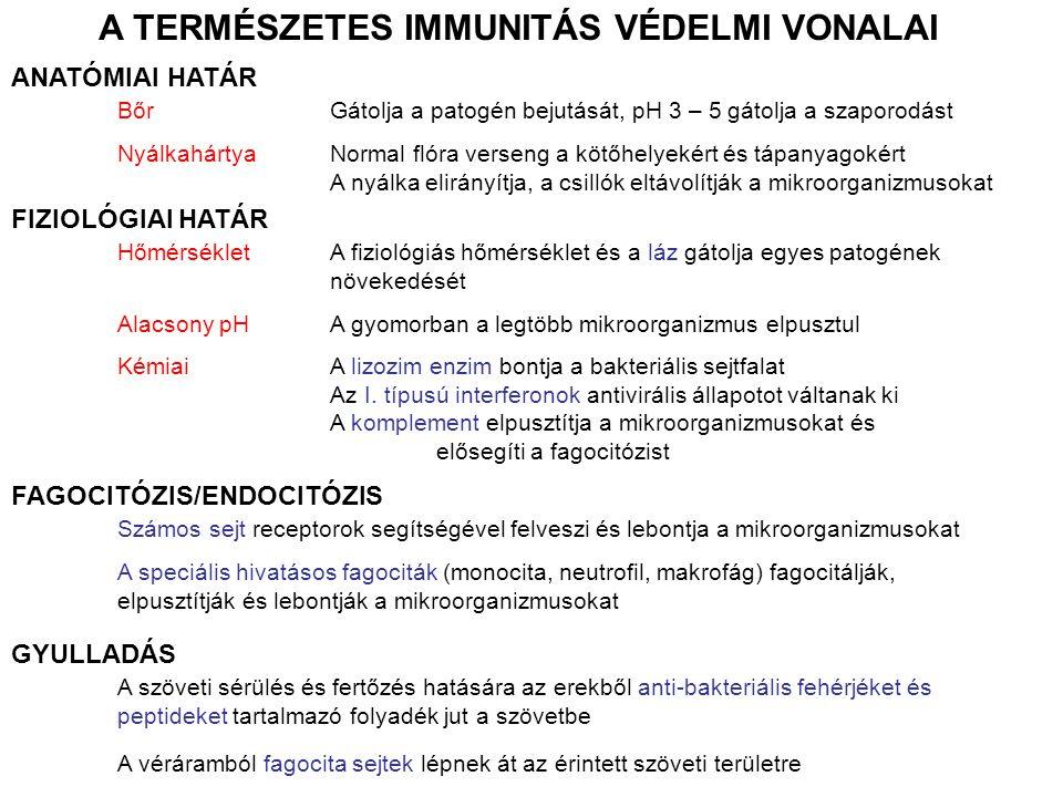 ANATÓMIAI HATÁR BőrGátolja a patogén bejutását, pH 3 – 5 gátolja a szaporodást NyálkahártyaNormal flóra verseng a kötőhelyekért és tápanyagokért A nyá
