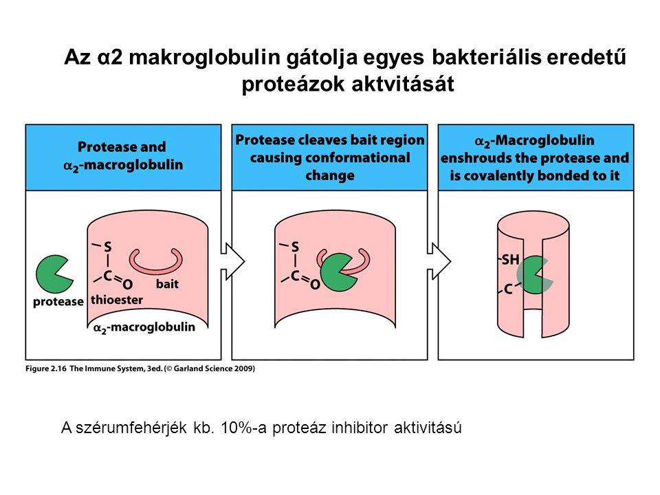 Az α2 makroglobulin gátolja egyes bakteriális eredetű proteázok aktvitását A szérumfehérjék kb. 10%-a proteáz inhibitor aktivitású