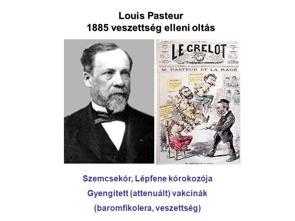 Louis Pasteur 1885 veszettség elleni oltás a a a Szemcsekór, Lépfene kórokozója Gyengített (attenuált) vakcinák (baromfikolera, veszettség)