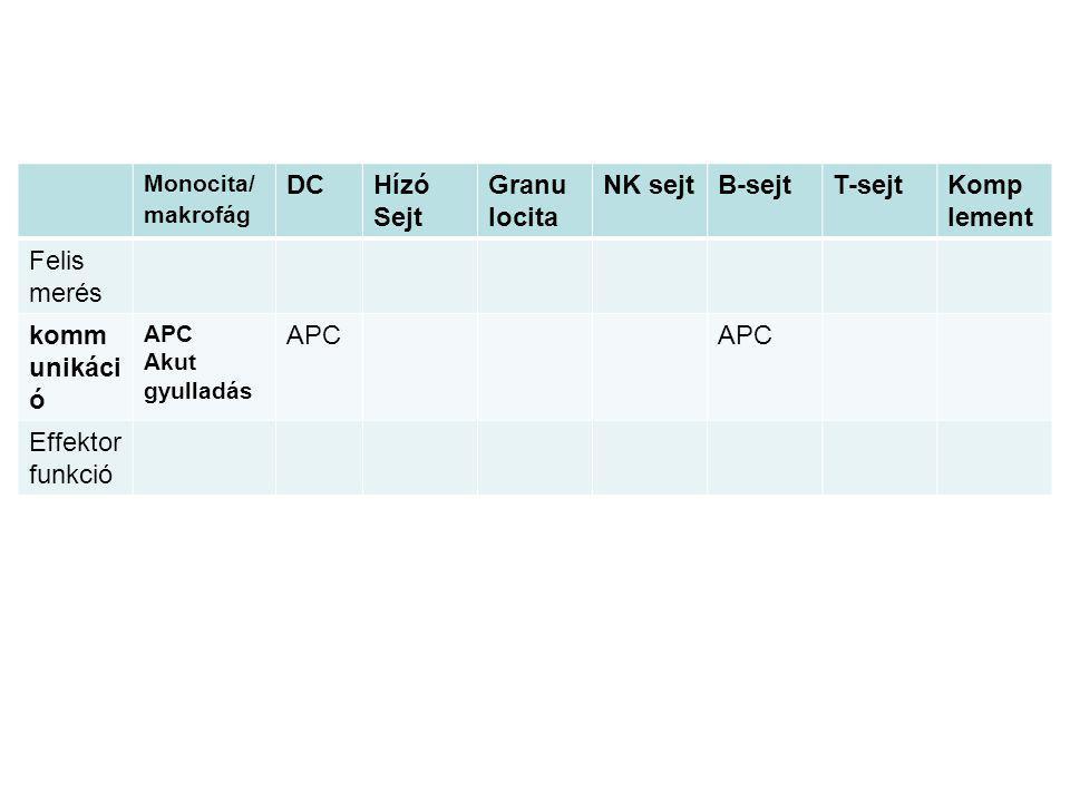 Az MHC polimorfizmusa (Major histocompatibility complex) Polimorf gén--- több változat (allél) előfordulása az adott génszakaszon (lokuszon) Az MHC a legpolimorfabb fehérjénk, a legtöbb féle változatban jelenik meg a populációban