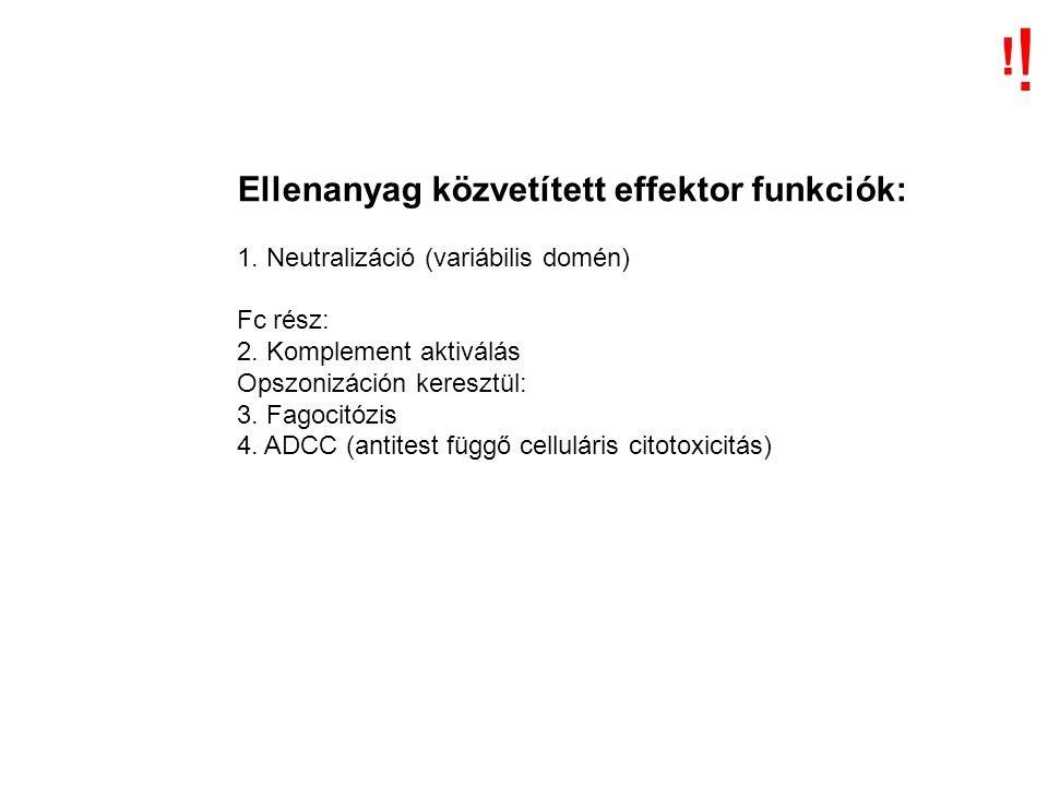 Ellenanyag közvetített effektor funkciók: 1. Neutralizáció (variábilis domén) Fc rész: 2. Komplement aktiválás Opszonizáción keresztül: 3. Fagocitózis