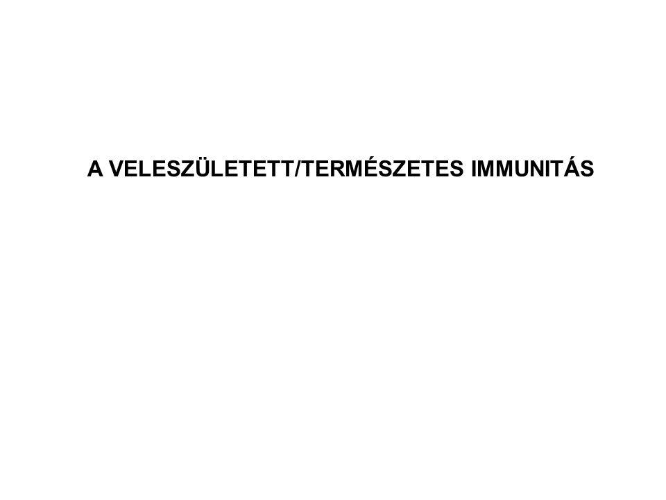 Monociták/makrofágok Granulociták NK sejtek komplement rendszer (dendritikus sejtek) A VELESZÜLETETT/TERMÉSZETES IMMUNITÁS résztvevői