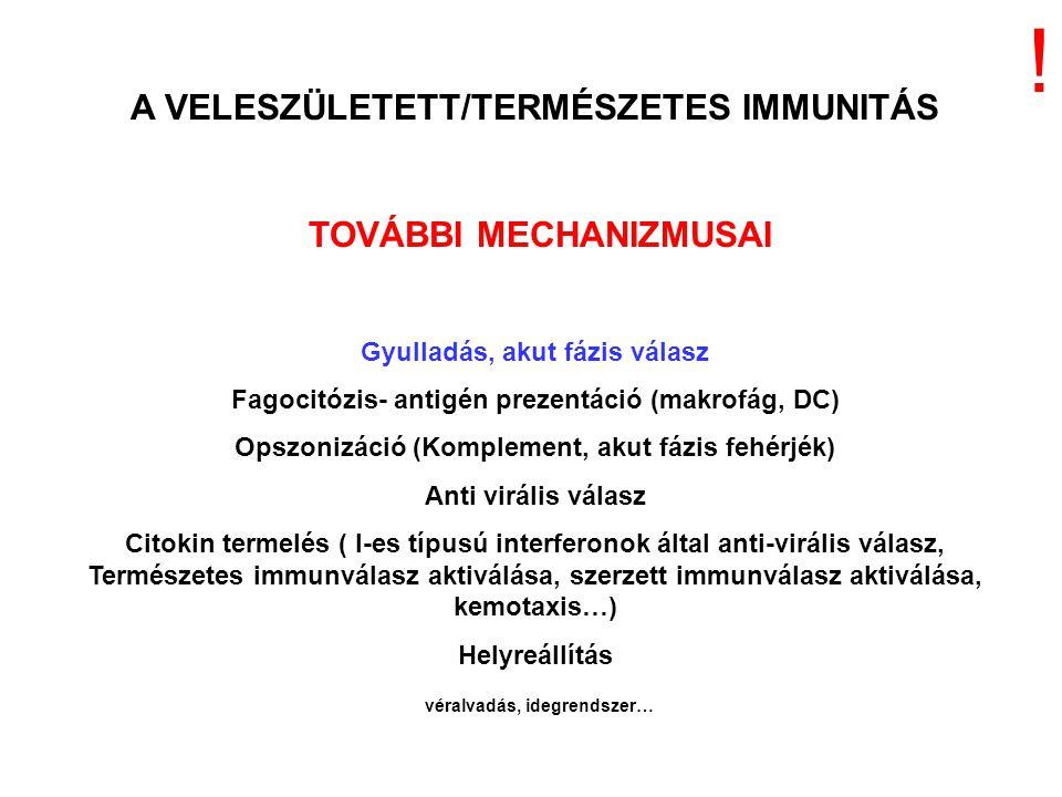 A VELESZÜLETETT/TERMÉSZETES IMMUNITÁS TOVÁBBI MECHANIZMUSAI Gyulladás, akut fázis válasz Fagocitózis- antigén prezentáció (makrofág, DC) Opszonizáció
