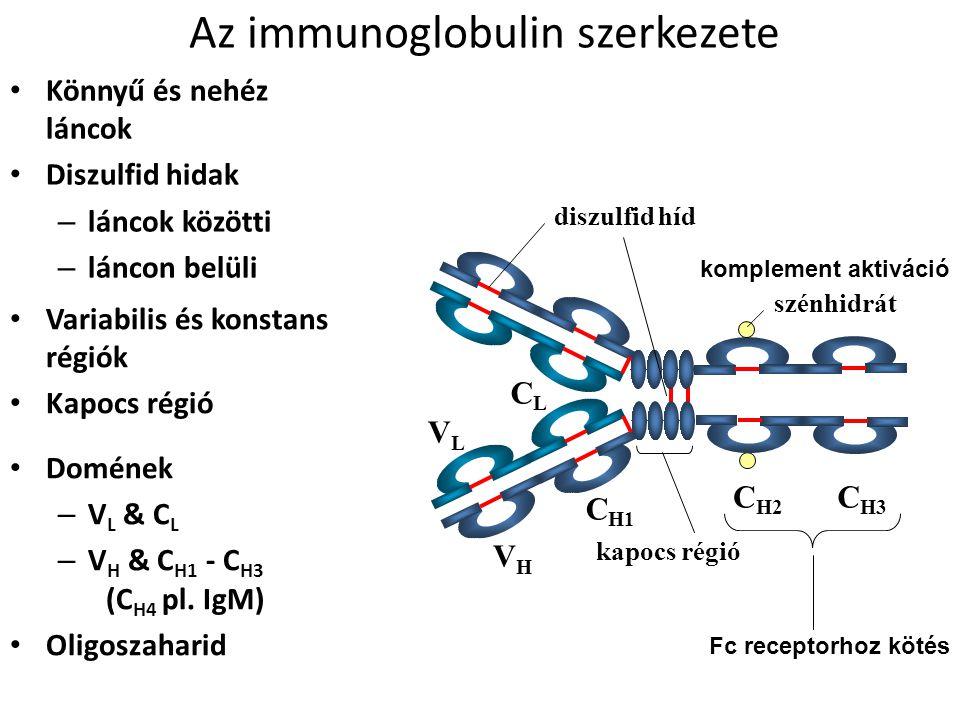 Az immunoglobulin szerkezete Könnyű és nehéz láncok Diszulfid hidak – láncok közötti – láncon belüli C H1 VLVL CLCL VHVH C H2 C H3 kapocs régió szénhidrát komplement aktiváció Fc receptorhoz kötés Variabilis és konstans régiók Kapocs régió Domének – V L & C L – V H & C H1 - C H3 (C H4 pl.
